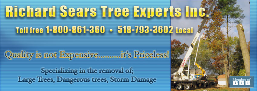 Richard Sewars Tree Experts
